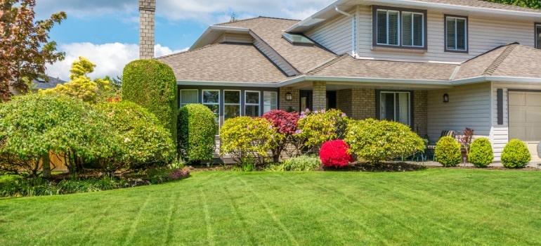 Should you choose between Kikuyu, Couch, Buffalo or Zoysia grass for your lawn?