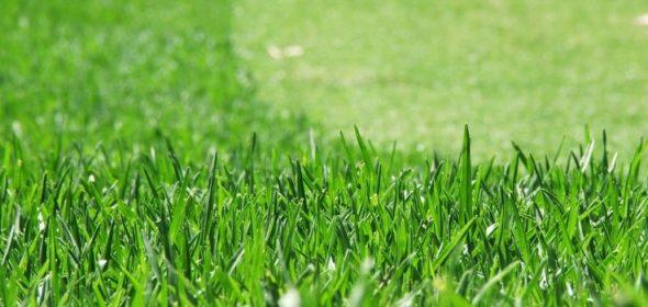 The guide to establishing and maintaining Kikuyu turf.