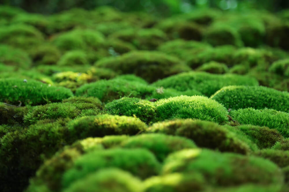 Moss-the perfect groundcover plant/.
