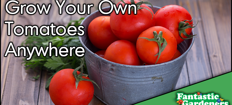 How to grow tomatoes anywhere!