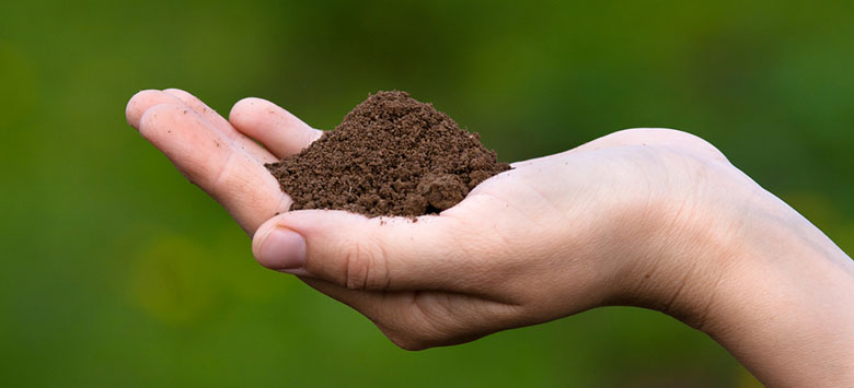 A hand holding a fertile soil in hand.