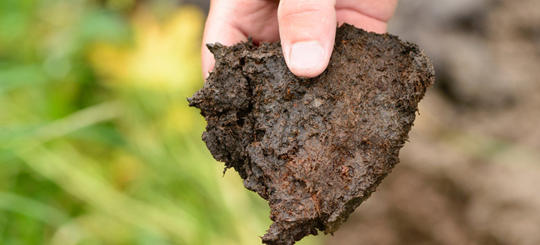Piece of peat soil.
