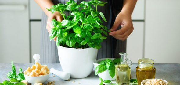 The complete guide to growing herbs from seeds.