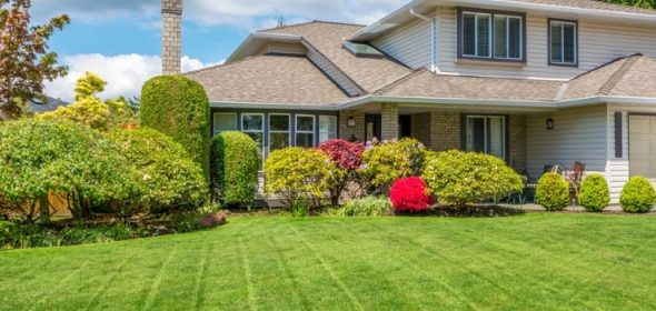 Should you choose between Kikuyu, Couch, Buffalo or Zoysia grass for your lawn?