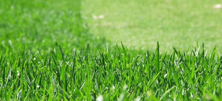 The guide to establishing and maintaining Kikuyu turf.