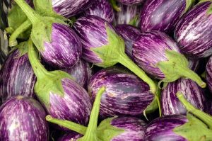 Eggplants for spring planting