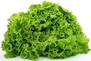 Lettuce for spring planting