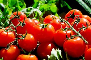 Tomatoes for spring planting
