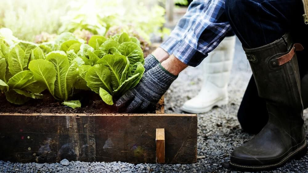 How to maintain a garden while dry farming