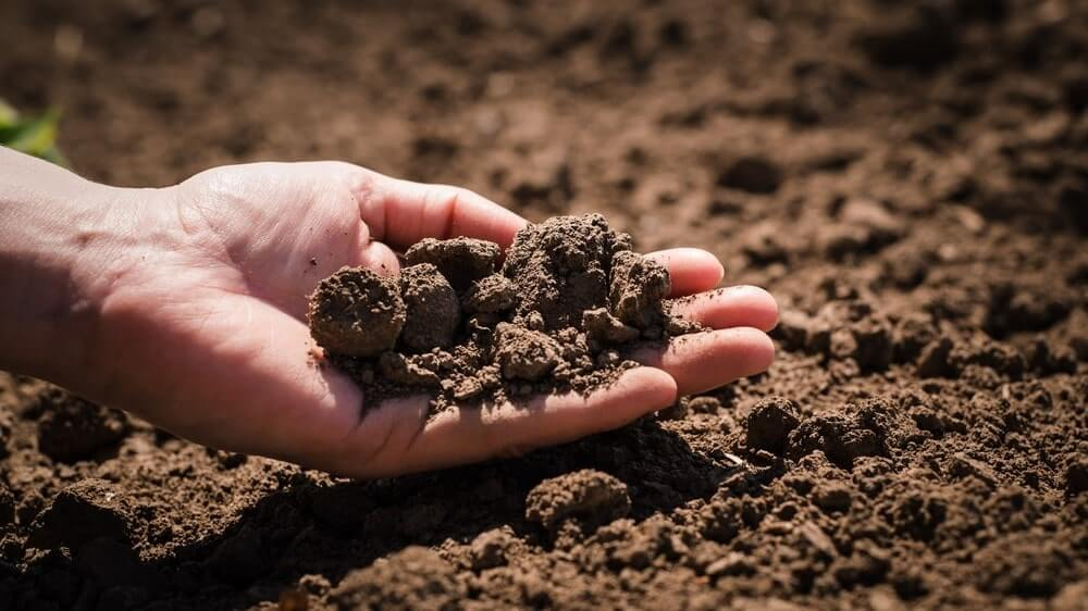 The perfect type of soil for growing a beautiful lawn.