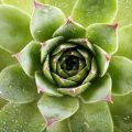 Grow Succulents In Water